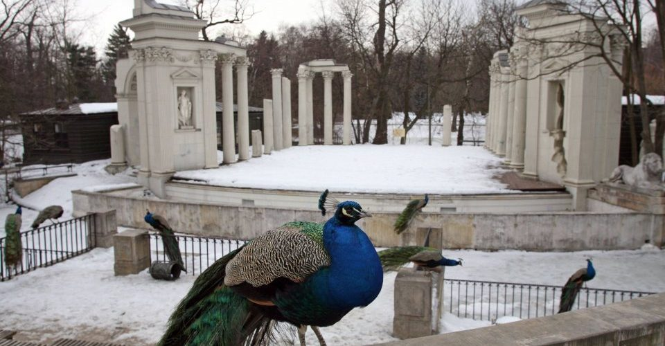 Lazienki Park in Warsaw - guided tour, sightseeing Warsaw
